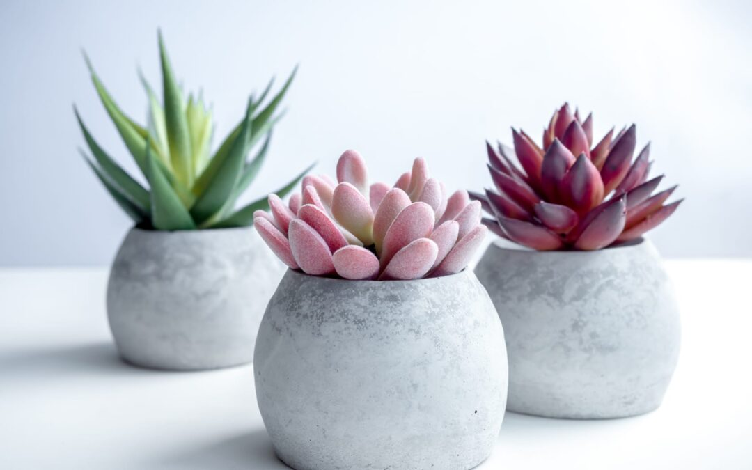 10 Tips on How to Care for Your Succulents