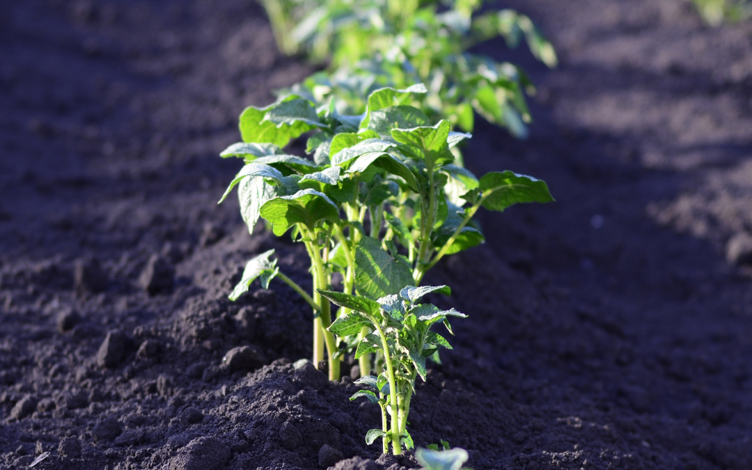 Five Amazing Benefits of Growing Your Own Food
